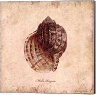 Shells IV Fine-Art Print