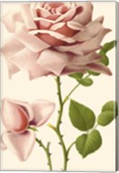 Victorian Rose I Fine-Art Print