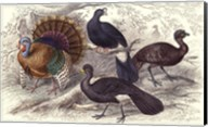 Turkey & Curassows Fine-Art Print