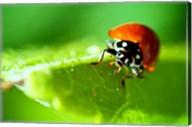 Anderson Mancini Ladybug Fine-Art Print
