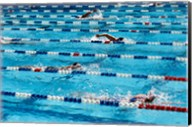High angle view of people swimming in a swimming pool, International Swimming Hall of Fame, Fort Lauderdale, Florida, USA Fine-Art Print
