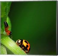 Ladybug and Friend Fine-Art Print
