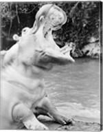 Hippopotamus yawning Fine-Art Print