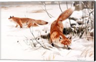 Common Foxes in the Snow Fine-Art Print