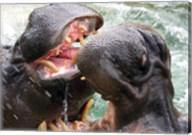 Hippopotamus at Barcelona Zoo Fine-Art Print