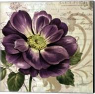 Study in Purple I-mini Fine-Art Print