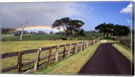 Rainbow over pineapple fields, Makawao, Maui, Hawaii, USA Fine-Art Print