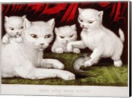 Three Little White Kitties Fine-Art Print