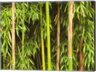 Bamboo Richelieu Fine-Art Print