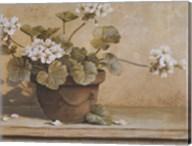 White Geranium Fine-Art Print