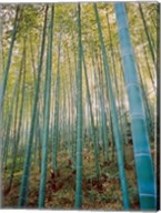 A Bamboo Forest, Sagano, Japan Fine-Art Print