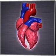Close-up of a human heart Fine-Art Print