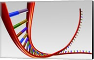 Close-up of a human DNA structure Fine-Art Print