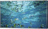 Tropical Fish  Bora Bora  French Polynesia Fine-Art Print