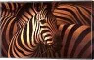 Zebra Grande Fine-Art Print