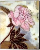 Pink Peony Blossom Fine-Art Print