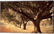 Island Oak Fine-Art Print
