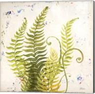 Nice Ferns II Fine-Art Print