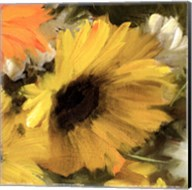 Sunflowers Square II Fine-Art Print