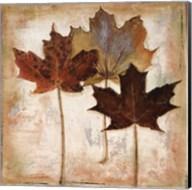 Nautral Leaves III Fine-Art Print