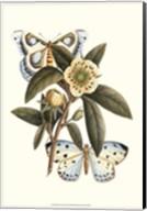 Butterfly Oasis I Fine-Art Print
