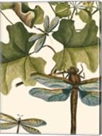 Dragonfly Medley II Fine-Art Print