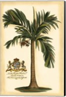 British Colonial Palm I Fine-Art Print