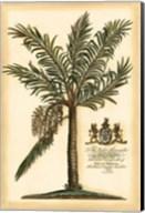 British Colonial Palm II Fine-Art Print