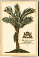 British Colonial Palm IV Fine-Art Print