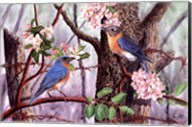 Bluebirds Fine-Art Print