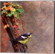 Magnolia Warbler Fine-Art Print