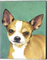 Dog Portrait-Chihuahua Fine-Art Print