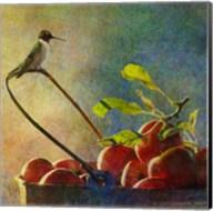 Apples & Hummer Fine-Art Print