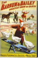The Barnum & Bailey Performing Geese, Roosters and Musical Donkey Fine-Art Print