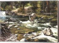 Buck in Midstream Fine-Art Print