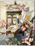 Cockatoo and Blossoms Fine-Art Print