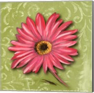 Blooming Daisy I Fine-Art Print