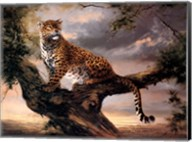 Leopard in Tree Fine-Art Print