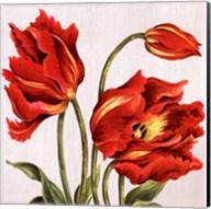 Tulips on Silk Fine-Art Print