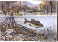 Trout Under Water Fine-Art Print