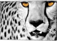 White Cheetah Fine-Art Print