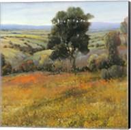 Field In Summer Fine-Art Print