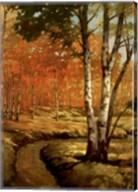 Woodland Stream II Fine-Art Print