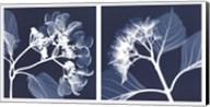 Hydrangeas [Negative] Fine-Art Print