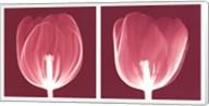 Tulips [Negative] Fine-Art Print