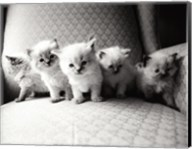 Five Kittens Fine-Art Print