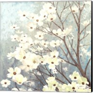 Dogwood Blossoms I Fine-Art Print
