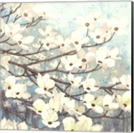 Dogwood Blossoms II Fine-Art Print