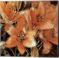 Apricot Dream I Fine-Art Print