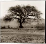 Willow Tree Fine-Art Print